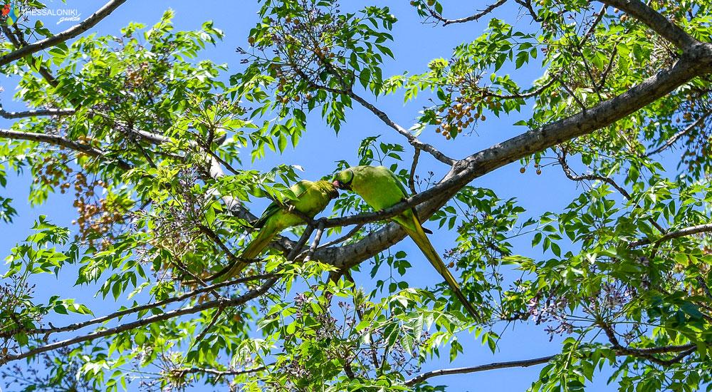 Παπαγαλάκια στη Θεσσαλονίκη