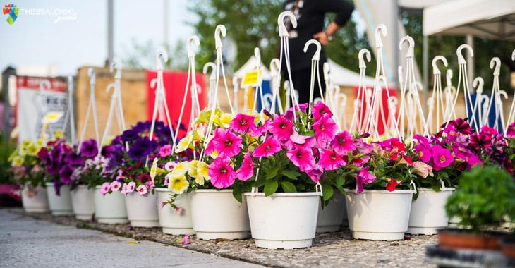 Λουλούδια γλάστρες από την Ανθοέκθεση στη Θεσσαλονίκη