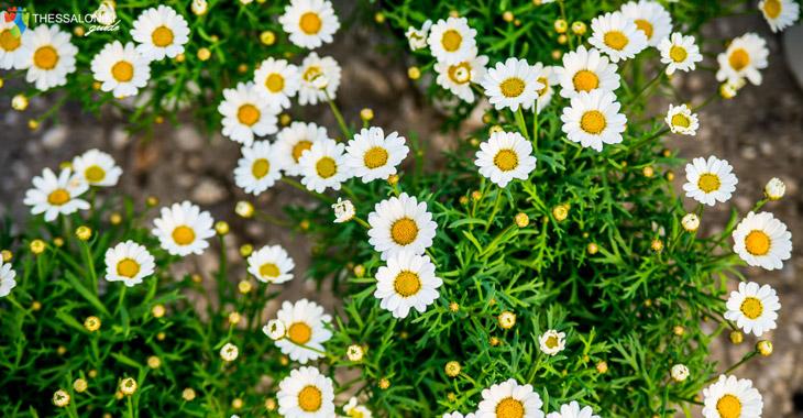 Λουλούδια Ανθοέκθεση στη Θεσσαλονίκη