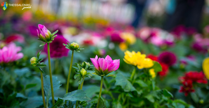 Λουλούδια από την Ανθοέκθεση στη Θεσσαλονίκη