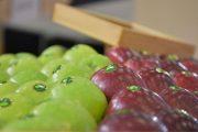Το Διεθνές Εμπορικό Γεγονός Φρέσκων Φρούτων και Λαχανικών, η FRESKON στην ΔΕΘ