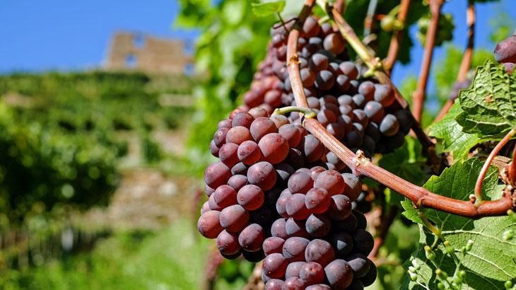 Σταφύλι - Κρασί