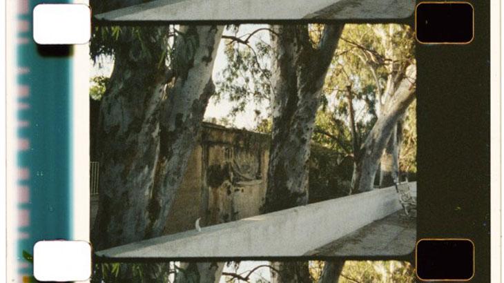 Ανάμεσα στους ευκαλύπτους (Among the Eucalyptuses)