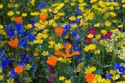 Τα μυστικά των άγριων λουλουδιών